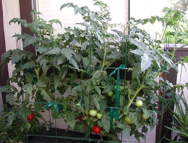 horta jardim na varanda: Horta-Jardim na varanda – (5) Hortas verticais