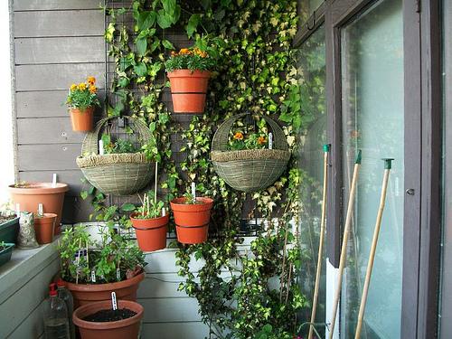 Passo a passo horta jardim na varanda 5 hortas for Balcony concept