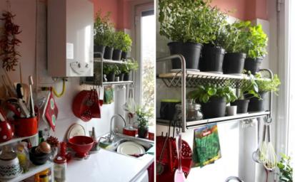 plantas-