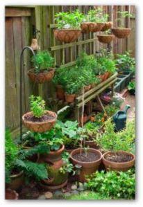 vegetable-contanier-gardening