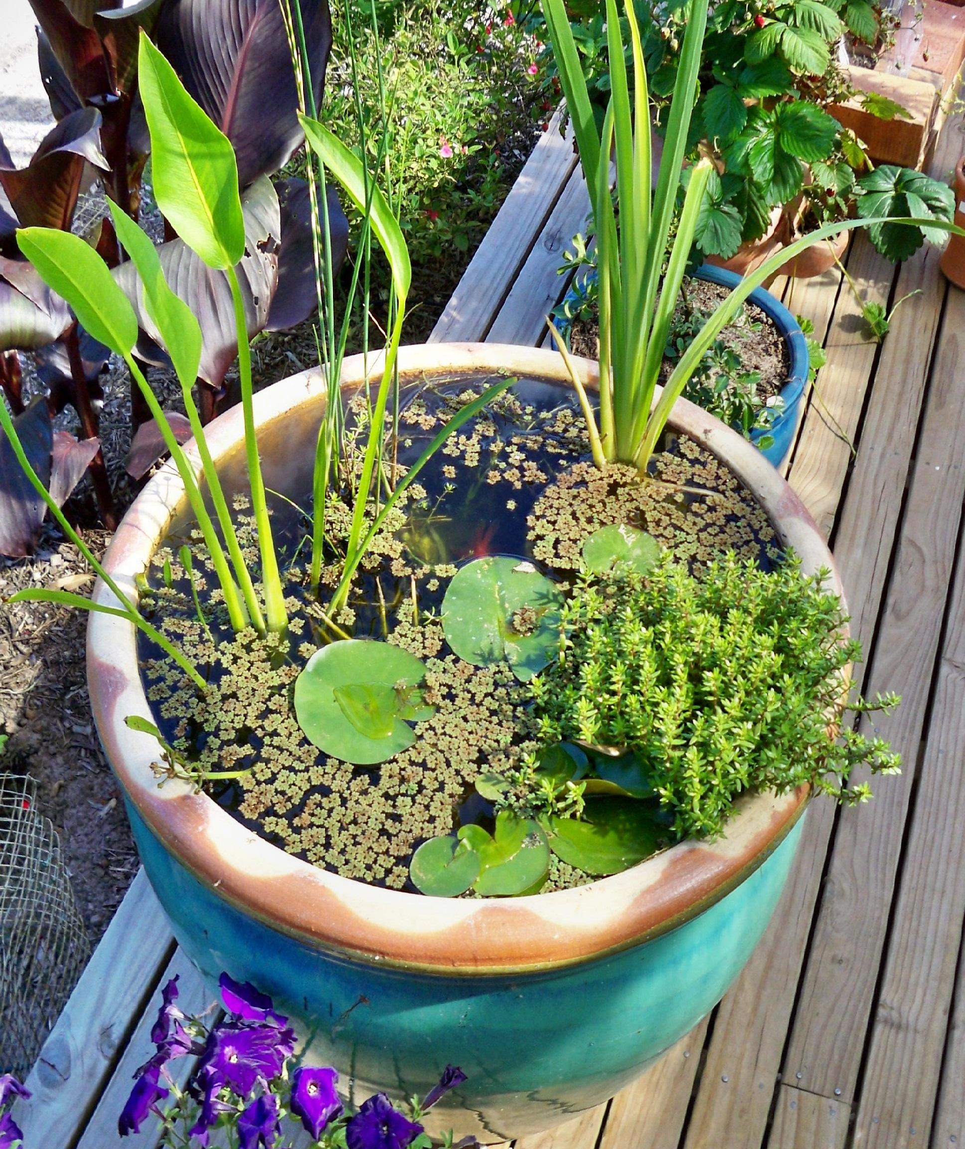 mini jardim aquatico: -Jardim na varanda: (9) Jardim aquático