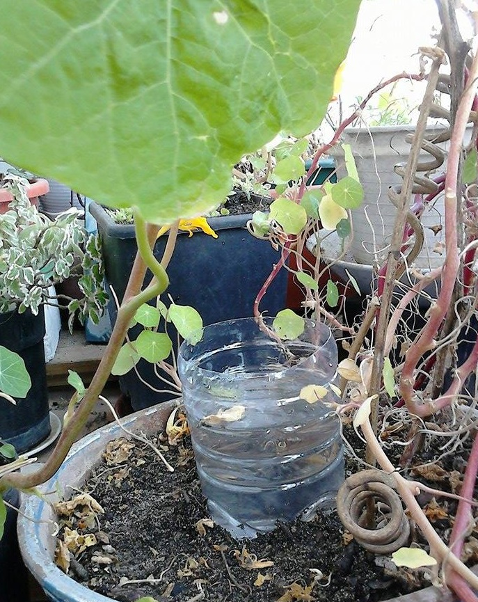 horta jardim na varanda: Horta-Jardim na varanda – (10) Manutenção