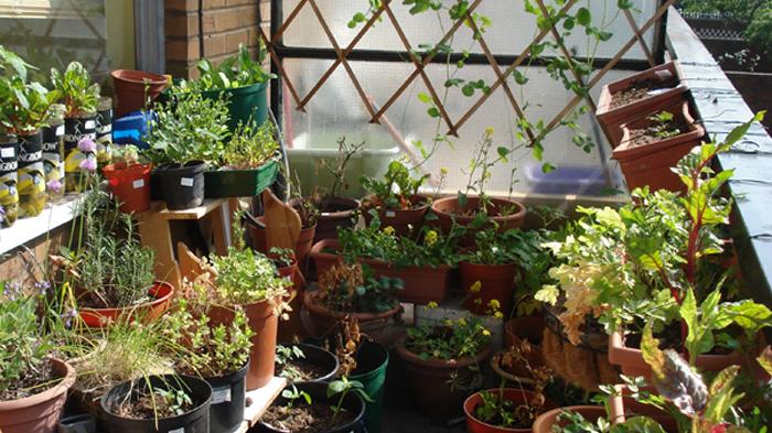 pequena horta no jardim : pequena horta no jardim:Passo a passo Horta-Jardim na varanda