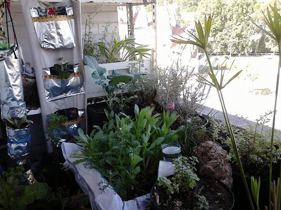 pequena horta no jardim : pequena horta no jardim:Passo a passo Horta-Jardim na varanda – (10) Manutenção
